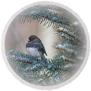 Junco In Pine Round Beach Towel