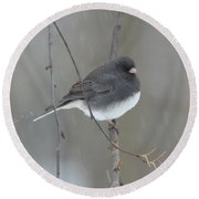 Junco In The Snow Round Beach Towel