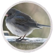 Junco On Board Round Beach Towel