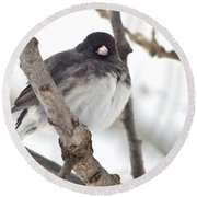 Junco Posing Round Beach Towel