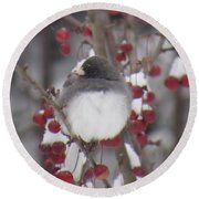 Junco Puffed Up On Crabapple Tree Round Beach Towel