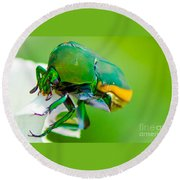June Bug Fig Beetle Round Beach Towel
