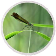 June Damselfly  Round Beach Towel