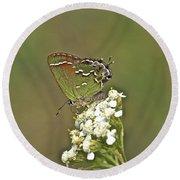 Juniper Or Olive Hairstreak Butterfly - Callophrys Gryneus Round Beach Towel