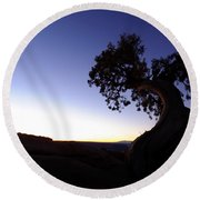 Juniper Tree At Dawn Round Beach Towel