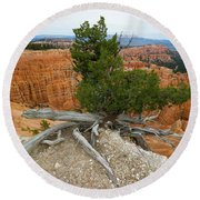 Juniper Tree Clings To The Canyon Edge Round Beach Towel