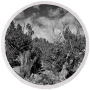 Juniper Trees At The Ghost Ranch Black And White Round Beach Towel