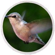 Juvenile Anna Hummingbird Round Beach Towel