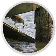 Juvenile Black Crowned Night Heron Round Beach Towel