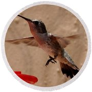 Juvenile Broadtale Anna Hummingbird Landing On The Perch Round Beach Towel