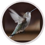 Juvenile Female Anna's Hummingbird In Flight Round Beach Towel