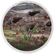 Juvenile Ibis Round Beach Towel