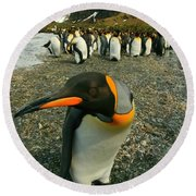 Juvenile King Penguin Round Beach Towel