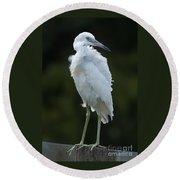Juvenile Little Blue Heron On Sign Round Beach Towel