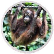 Juvenile Orangutan Borneo Round Beach Towel