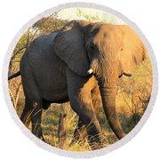Kalahari Elephant Round Beach Towel