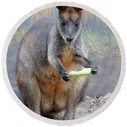 kangaroo Snack Round Beach Towel