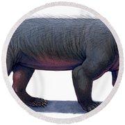 Kayentatherium, A Mammal-like Round Beach Towel