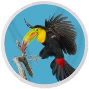 Keel-billed Toucan About To Land Round Beach Towel