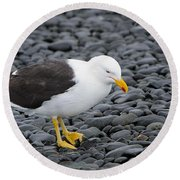 Kelp Gull Round Beach Towel