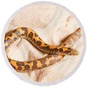 Kenyan Sand Boa Eryx Colubrinus Round Beach Towel