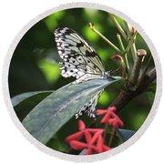 Key West Butterfly Conservatory - Idea Leuconoe Round Beach Towel
