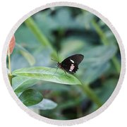 Key West Butterfly Conservatory - In Black White And Orange Round Beach Towel