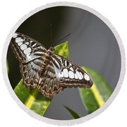 Key West Butterfly Conservatory - In Brown And White Round Beach Towel