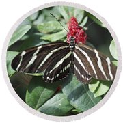 Key West Butterfly Conservatory - Zebra Heliconian Round Beach Towel