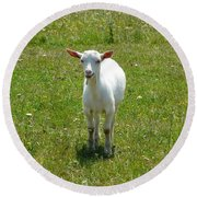 Kid Goat Round Beach Towel