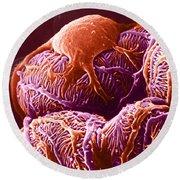 Kidney Glomerulus, Sem Round Beach Towel