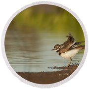 Killdeer Fluffing Up On The Shore  Round Beach Towel