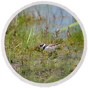 Killdeer Hatchling Round Beach Towel