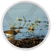 Kildeer Hunting For Worms Round Beach Towel