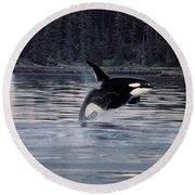 Killer Whale Orcinus Orca Breaching Round Beach Towel