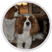 King Charles Dogs Round Beach Towel