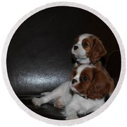 King Charles Puppies Round Beach Towel