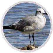 King Of The Rock Seagull Round Beach Towel