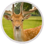 King Of The Spotted Deers Round Beach Towel