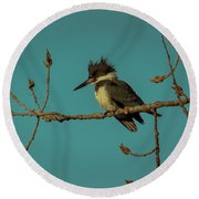 Kingfisher On Limb Round Beach Towel