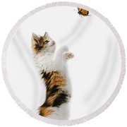 Kitten And Monarch Butterfly Round Beach Towel by Wave Royalty Free