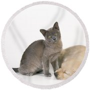 Kitten And Puppy Lying Together Round Beach Towel