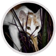 Kitten In The Plant Round Beach Towel
