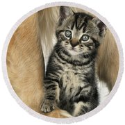 Kitten With Golden Retriever Round Beach Towel