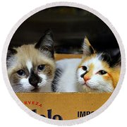 Kittens In A Box Round Beach Towel