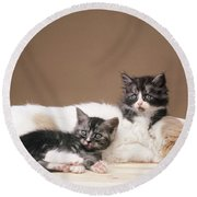 Kittens Lying With Puppy Round Beach Towel