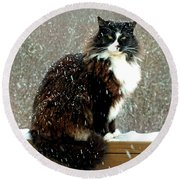 Kittycat In The Snow On The Fence Round Beach Towel