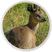 Klipspringer Antelope Round Beach Towel