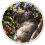 Koala Bear Round Beach Towel