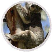 Koala Round Beach Towel by Bob Christopher